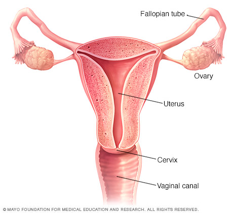Vaginal Hysterectomy Gynecology